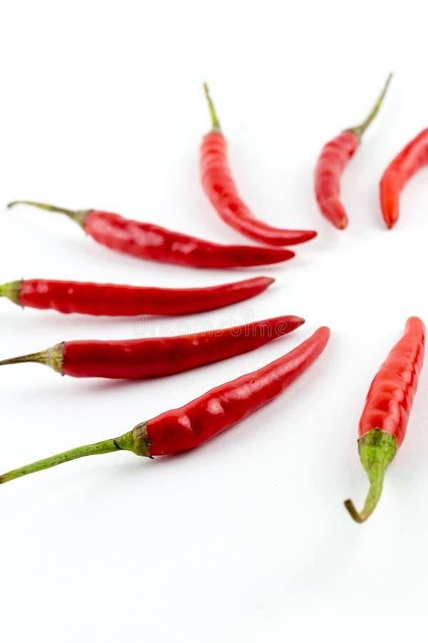 Set ostra czerwonego chili pieprzy papryki część okrąg na białej tło ostrości na przednim rzędzie obraz royalty free