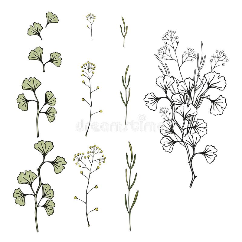 Set ostrza trawa, Ginkgo gałąź, liście i bukiet, Odosobnionej wektorowej ręki rysunkowa ilustracja ilustracja wektor