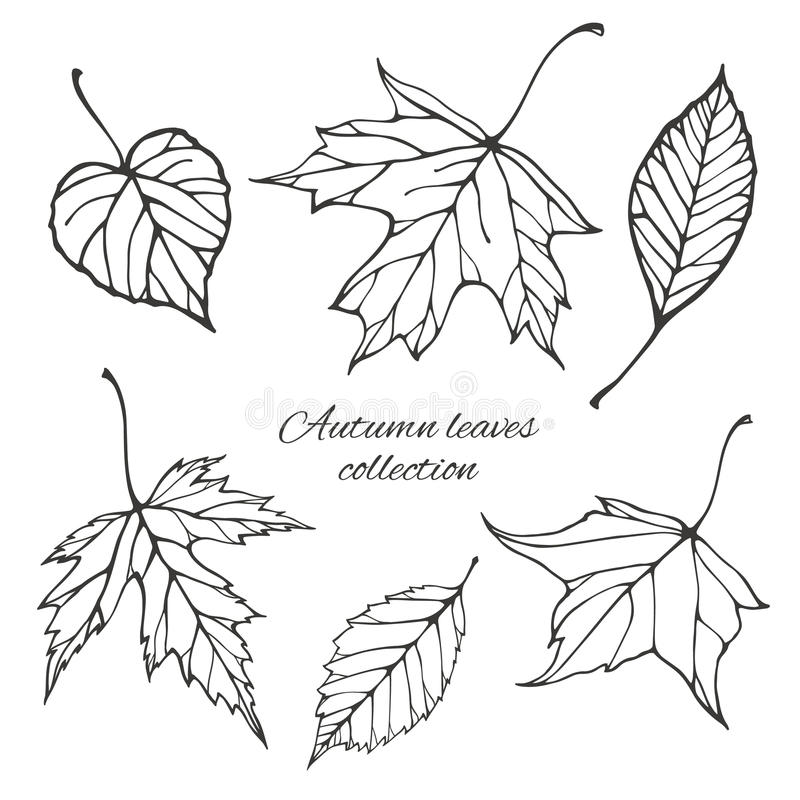 set of outline autumn leaves stock vector image 43758160