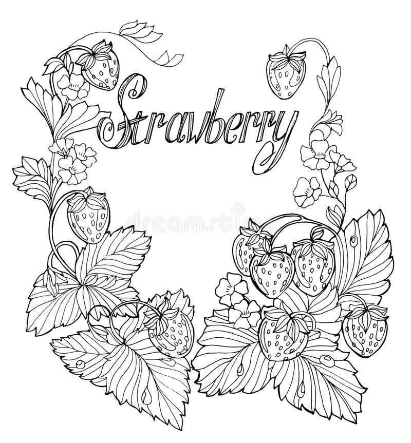 Set Of Outline Drawings Of Strawberries Stock Vector Illustration