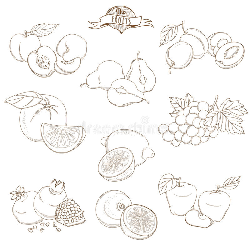 Set of Outline hand drawn fruits with leaves( apple, pear, apricot, plum, orange, lemon, grape, pomegranate, grapefruit, peach) royalty free illustration
