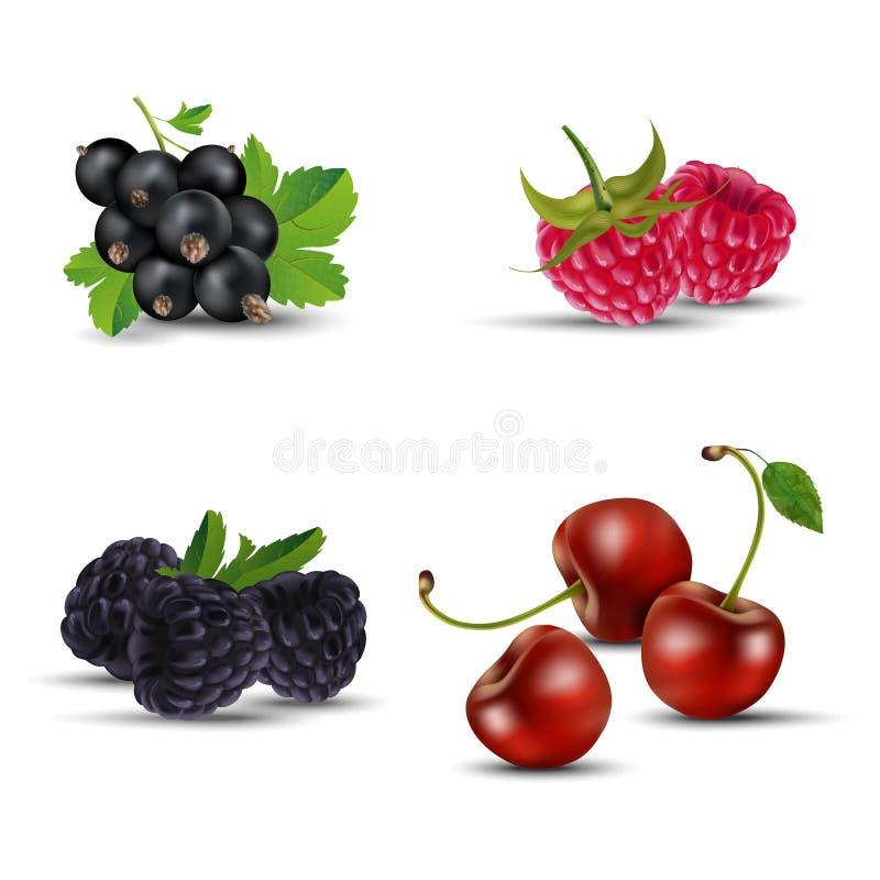 Set owoc blackcurrant, malinka, czernica i wiśnia -, royalty ilustracja