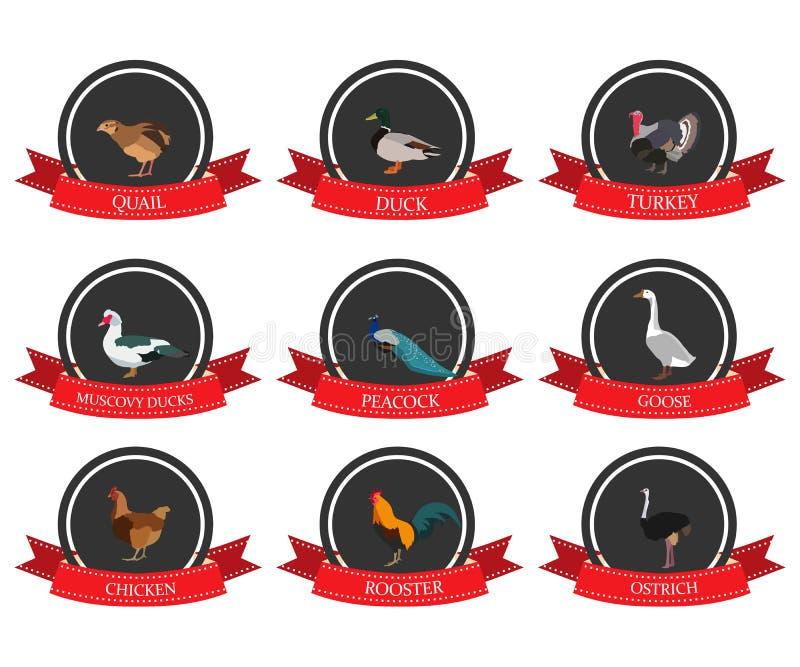 Set płaskie ikony z ptaka imieniem royalty ilustracja