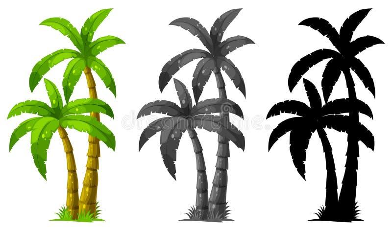 Set of palm tree vector illustration