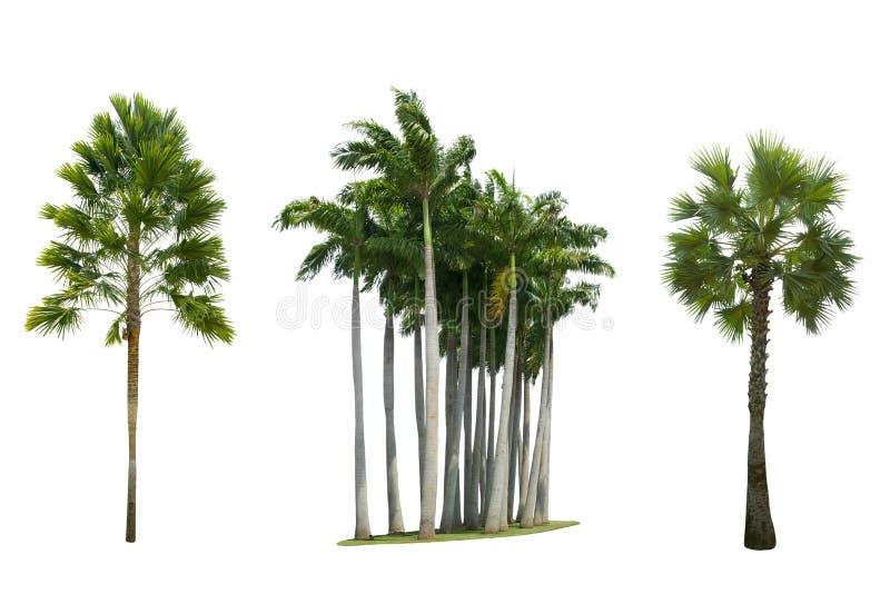 Set of palm tree isolated on white background. Close up set of palm tree isolated on white background royalty free stock photo