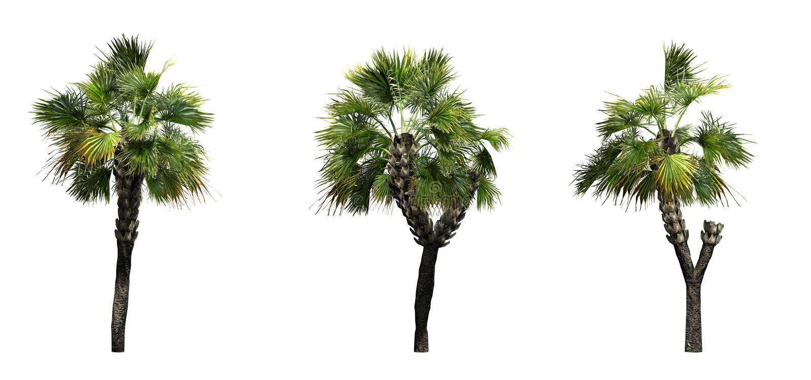 Set of Palmetto Palm trees. Isolated on white background stock illustration