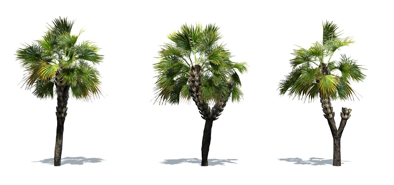 Set of Palmetto Palm trees with shadow on the floor. Isolated on white background royalty free illustration