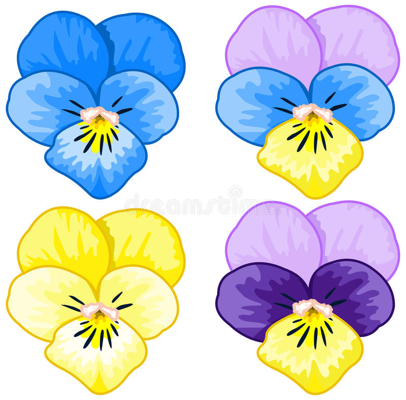 set of pansy stock vector illustration of clipart herbal 65273759 rh dreamstime com pansy clip art border pansy border clip art free