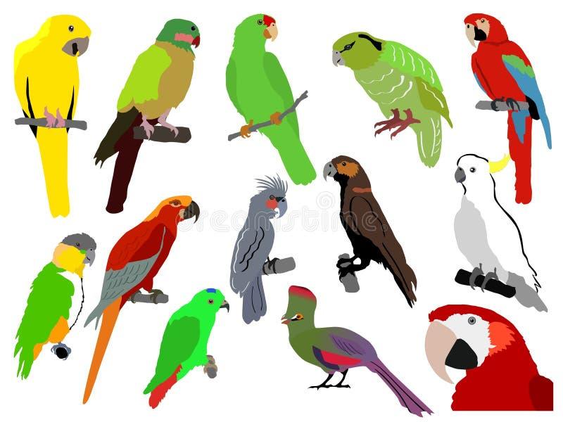 Download Set of parrots stock vector. Illustration of vector, parrot - 15102010