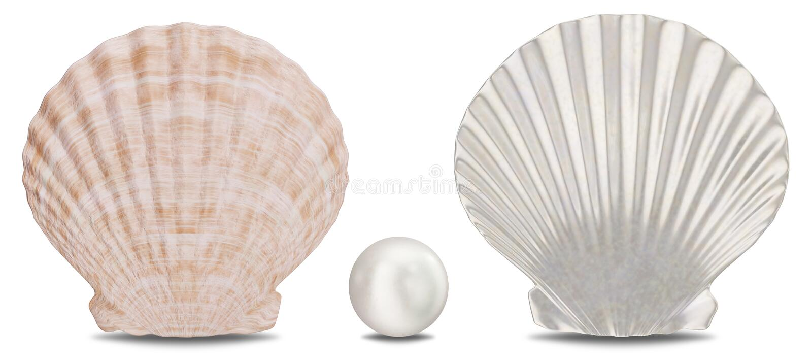 Set of pearls, sea shell, inner and outer side isolated on white background with shadow. Sea shell front view. Gem vector illustration