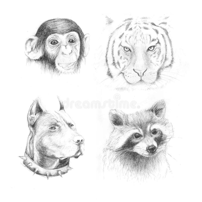 Download set pencil drawing animals stock illustration illustration of raccoon 73997871