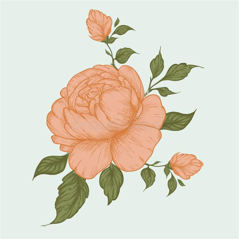 Set of peony flowers, bud, leaves, hand drawn sketch style vector illustration on white background. stock illustration