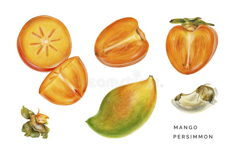 Set of persimmon and mango. royalty free stock image