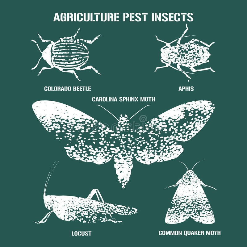 Set of pest insects vector illustration with signs. Agriculture and garden pest bugs, fly, colorado beetle, locust, moths as silhouettes and icons. English royalty free illustration