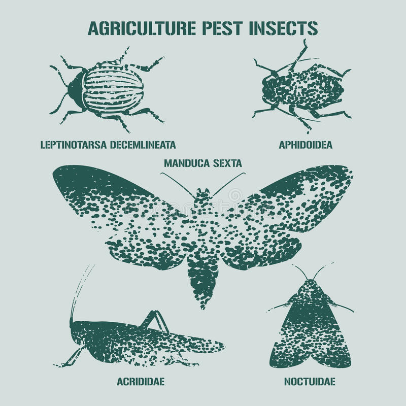 Set of pest insects vector illustration with signs. Agriculture and garden pest bugs, fly, colorado beetle, locust, moths as silhouettes and icons. Latin names vector illustration