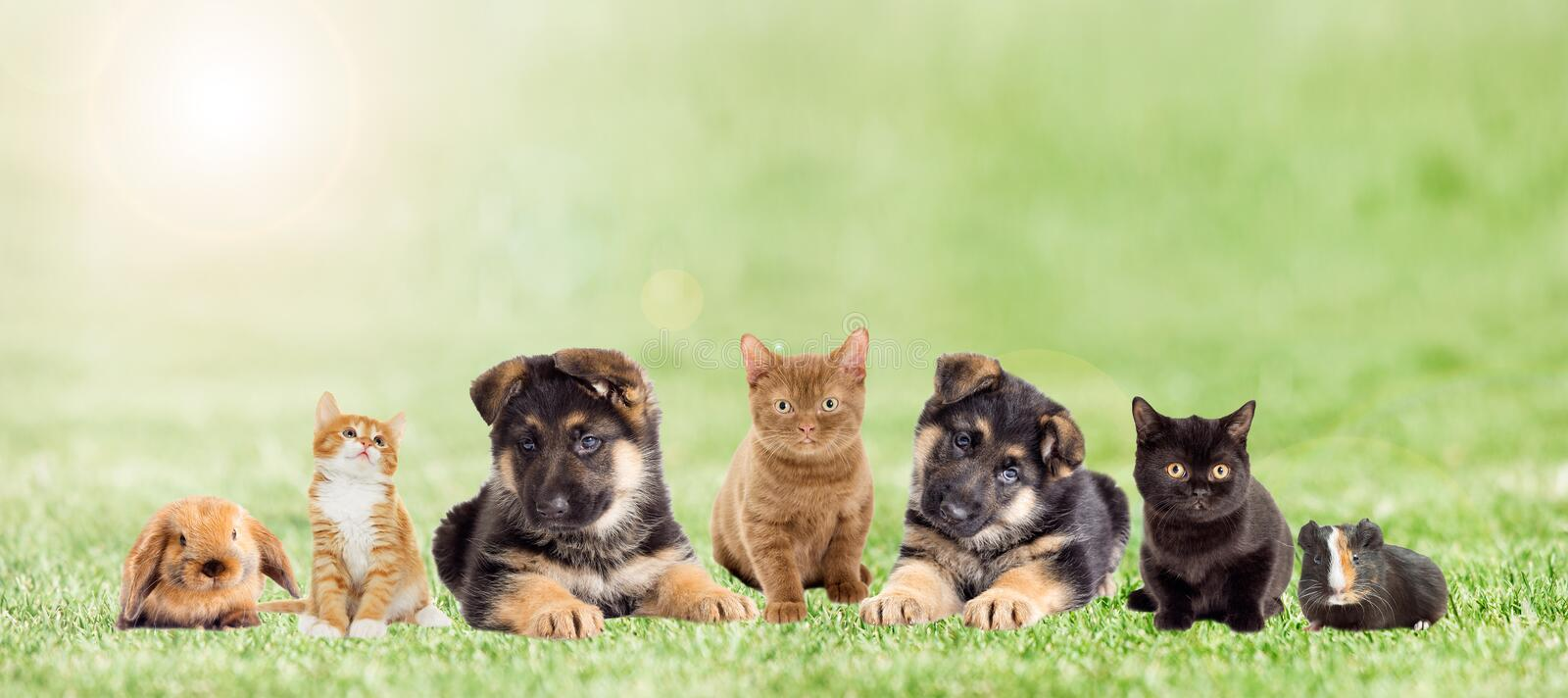 Set pets on green grass, outdoors. A set pets on green grass, outdoors royalty free stock photography