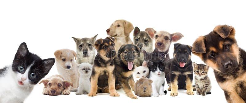 Set of pets. Isolated on white background