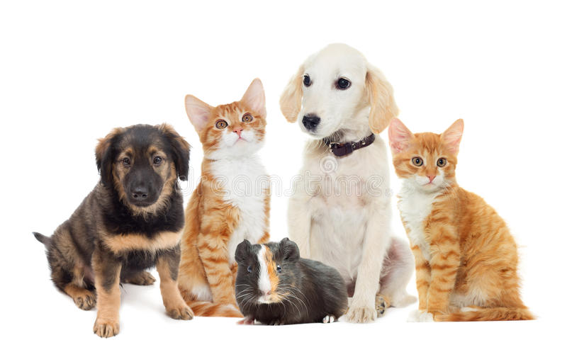 Set pets. Looking on a white background royalty free stock photos