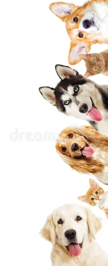 Set of pets peeping out stock image