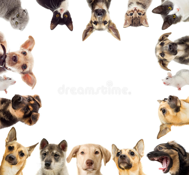 Set pets. On a white background