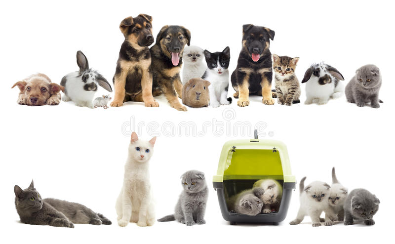 Set of pets. On a white background royalty free stock photos