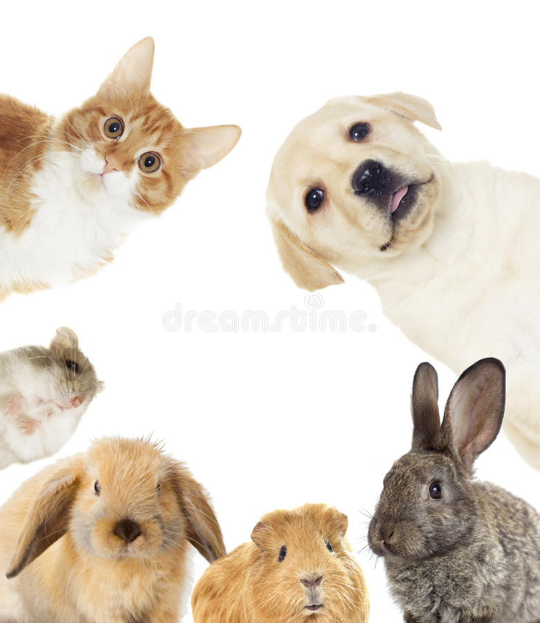 Set of pets royalty free stock photos