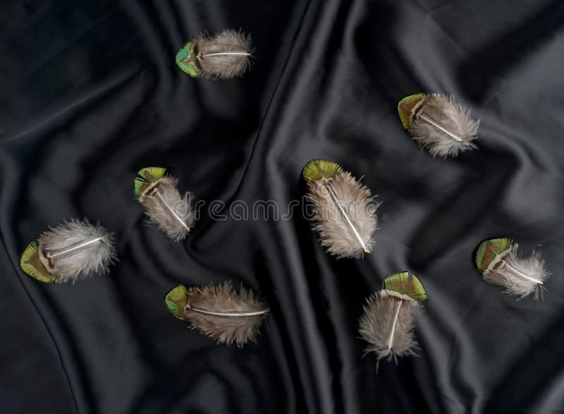 Set of pheasant Turkey feather on black silk background stock photography