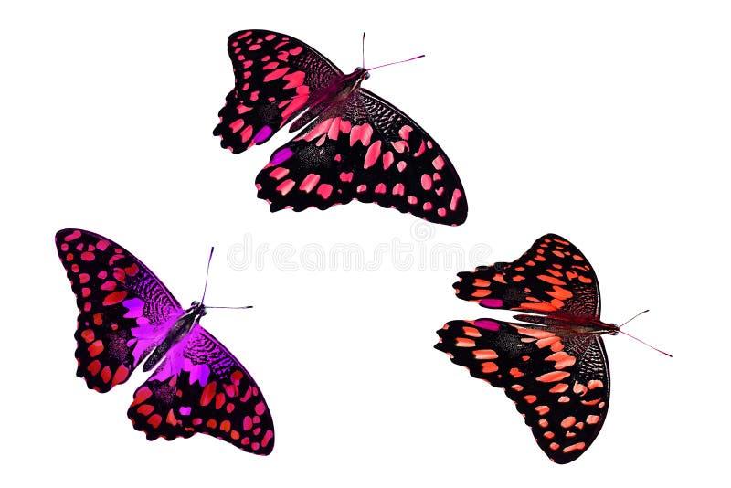 Set piękni kolorów motyle pojedynczy białe tło zdjęcia royalty free