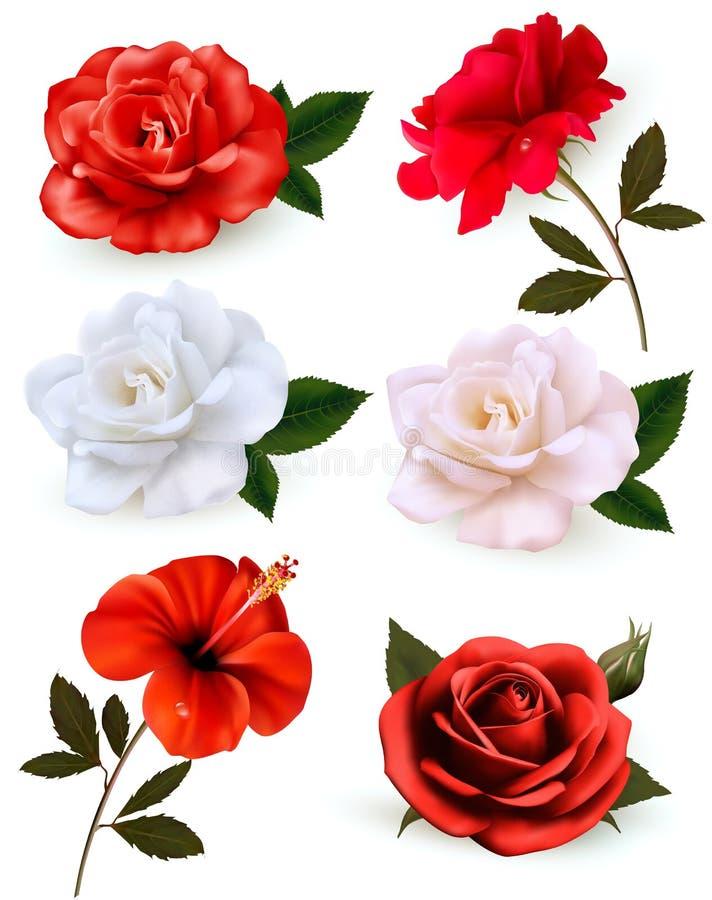 Set piękni kwiaty odizolowywający na białym tle royalty ilustracja