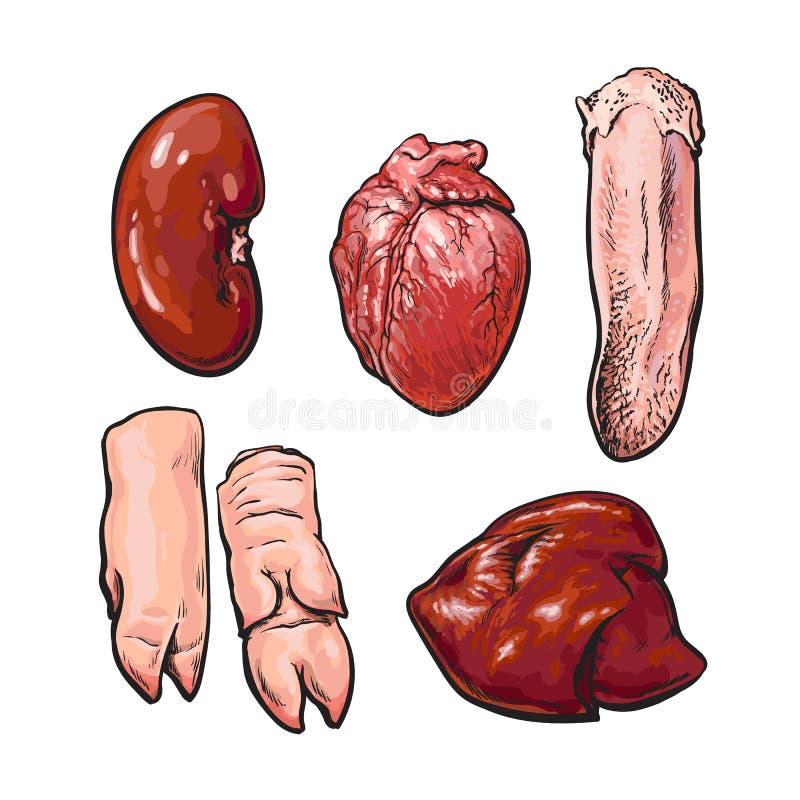 Set of pig organs stock vector. Illustration of heart - 71477004
