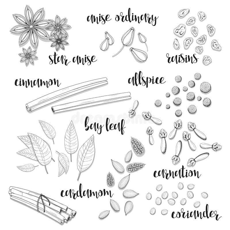Set pikantność w nakreśleniu Anyż, kardamon, cynamon, allspice ilustracja wektor