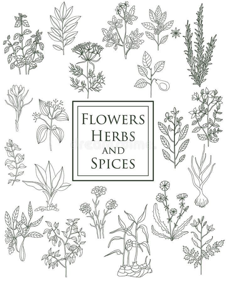 Set pikantność, ziele i officinale, zasadza ikony rośliny uzdrowić ilustracji