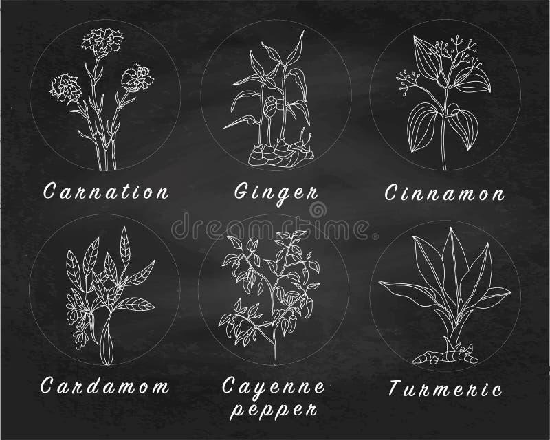 Set pikantność, ziele i officinale, zasadza ikony rośliny uzdrowić ilustracja wektor