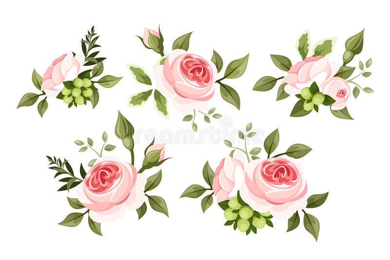 Set of pink roses. Set of vintage pink roses isolated on a white background royalty free illustration