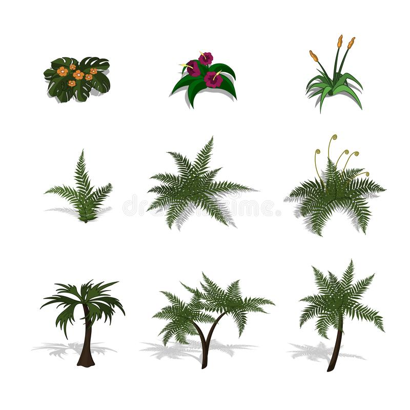 Set of plants in isometric style. Cartoon tropical tree and fern. Isolated image of jungles palm and bush. Set of plants in isometric style. Cartoon tropical royalty free illustration