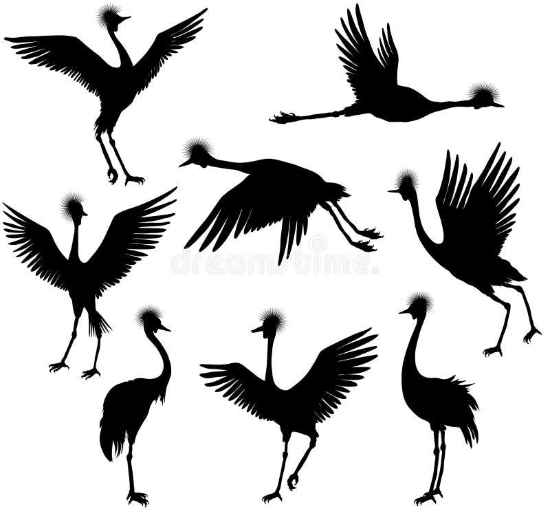 Set popielaci koronowani żurawie royalty ilustracja