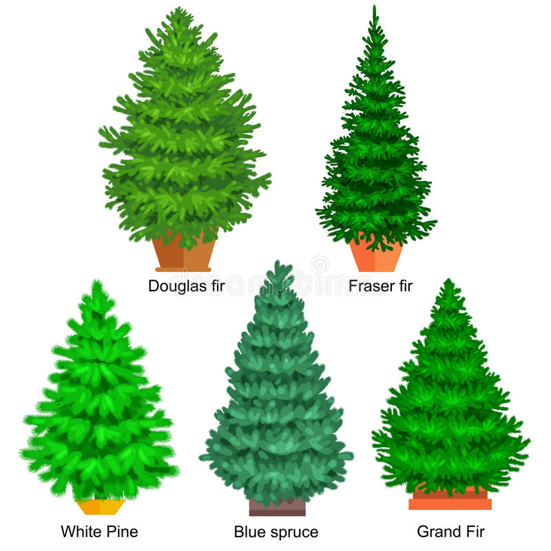 Set of potted christmas vector tree like fir or pine Blue spruce for New year celebration without holiday decoration stock illustration
