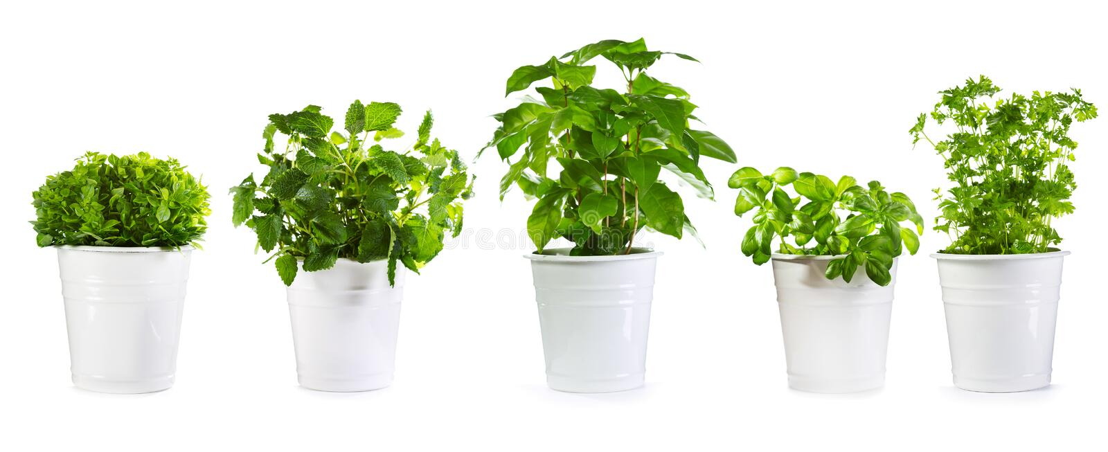 Set of potted green plants stock images