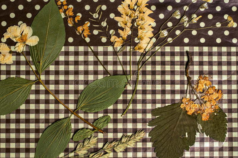 A set of pressed field flowers stock images