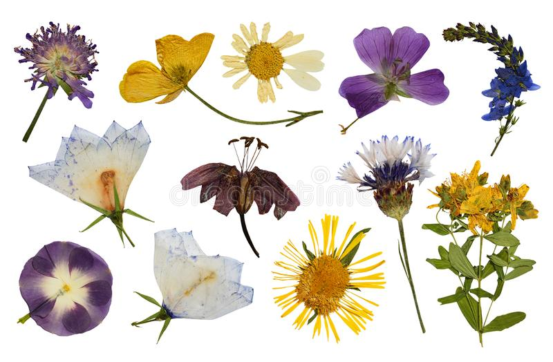Set of pressed flowers royalty free stock photo