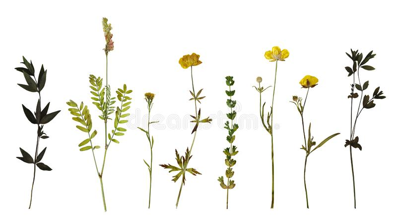 Set of pressed plants stock images