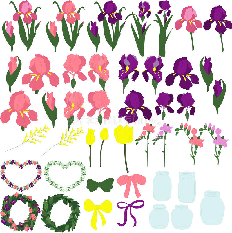 Set of purple and pink irises, the individual parts of the flowers, the buds of irises, leaves of irises, flowers of irises,. On a transparent background stock illustration
