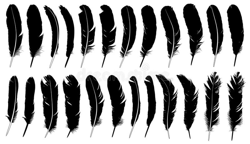 Set różni piórka ilustracji