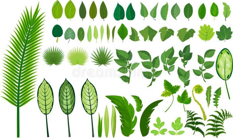 Set różni zieleni liście ilustracja wektor