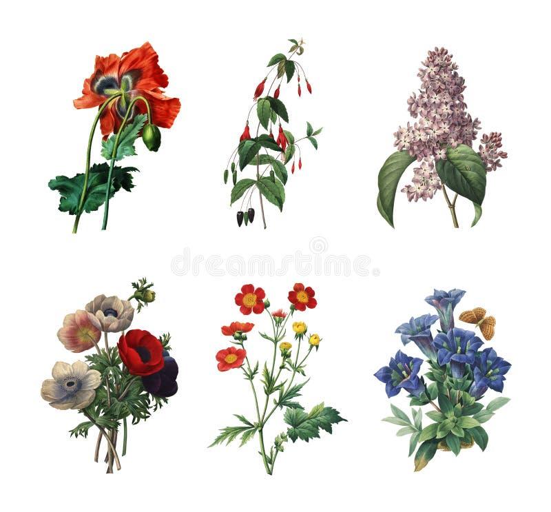 Set różnorodni kwiaty | Antykwarskie kwiat ilustracje ilustracja wektor