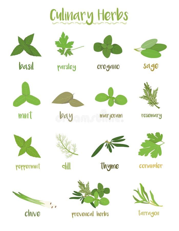 Set 15 różnych kulinarnych ziele w kreskówka stylu royalty ilustracja