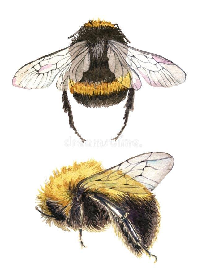 Set ręka rysująca akwarela obrazu pszczoła na białym tle ilustracji