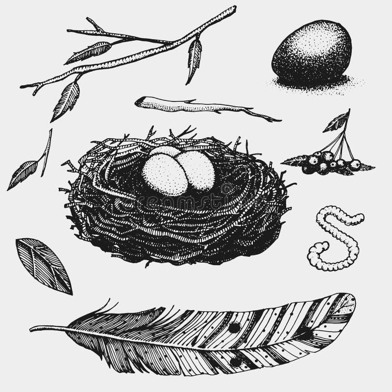 Set ręka rysujący gniazdeczko liście jagoda jajko i jedzenie dla ptaków royalty ilustracja