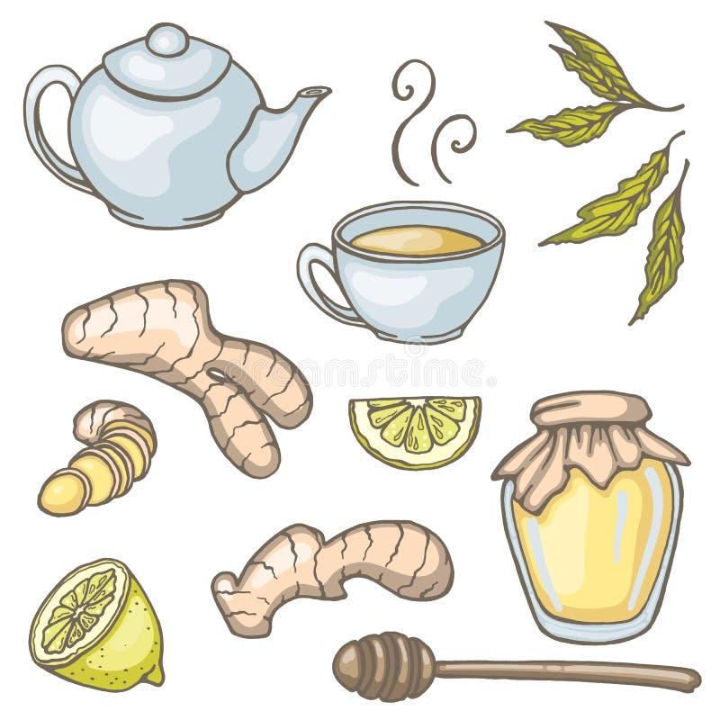 Set ręka rysujący imbirowi herbaciani elementy ilustracja wektor
