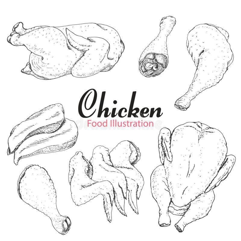 Set ręka rysujący kurczak odizolowywający na białym tle royalty ilustracja